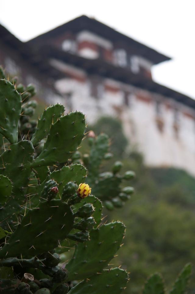 Wangdi Dzhong